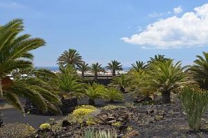 Lanzarote : volcanic island of Manrique