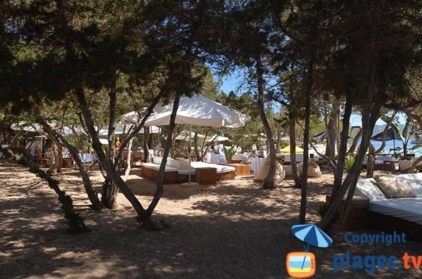 Matelas dans les pins de Cala Bassa - Ibiza