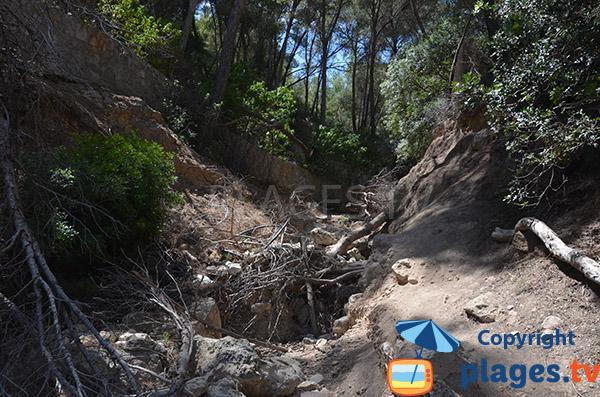 Sentier d'accès à la Cala en Cranc - Majorque