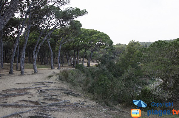 Forêt à Palamos