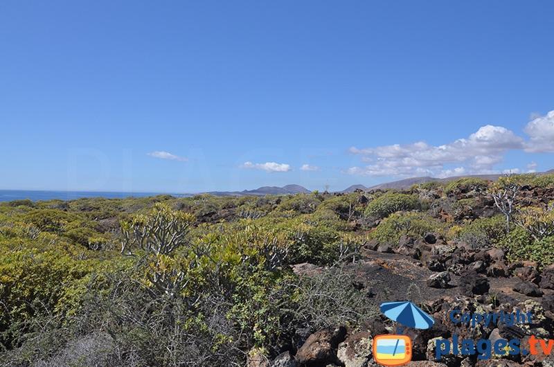 Champ de lave dans le nord de Lanzarote