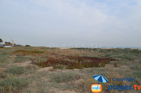 Massif dunaire de la plage de Castelldefels