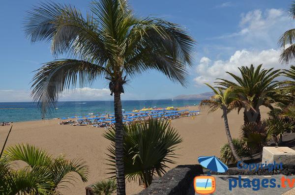 Palmiers et cocotiers à Puerto del Carmen à Lanzarote