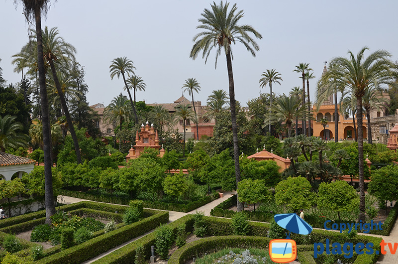 Jardin de l'Alcazar à Séville