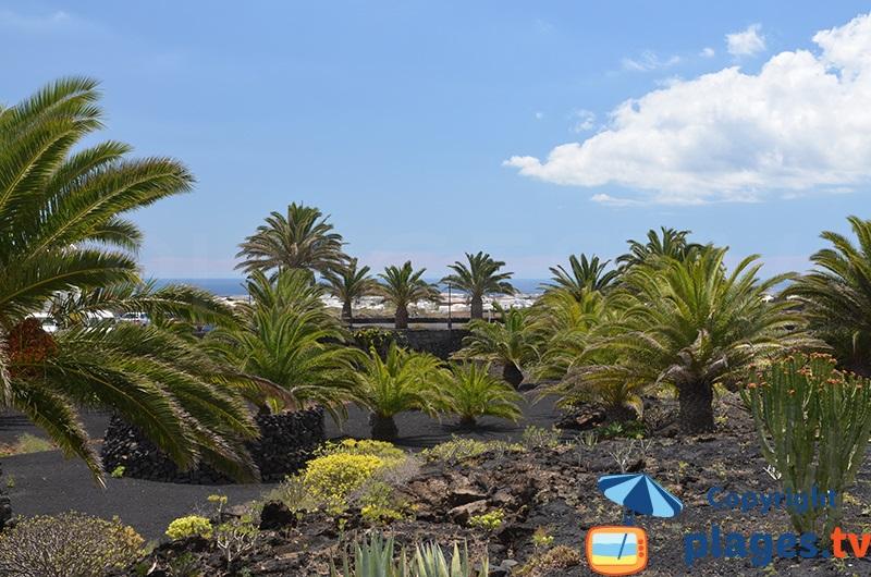 Jardin de Manrique à Lanzarote