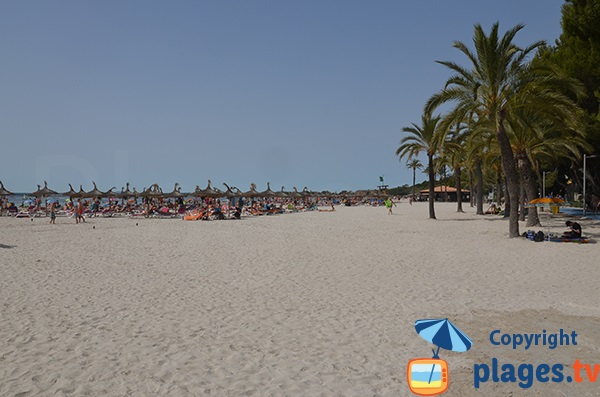 Arbres sur la plage d'Alcudia - Baléares