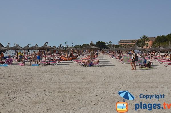 Plage privée à Port d'Alcudia - Majorque