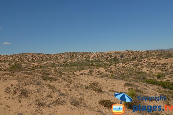Dunes - Altet - Alicante