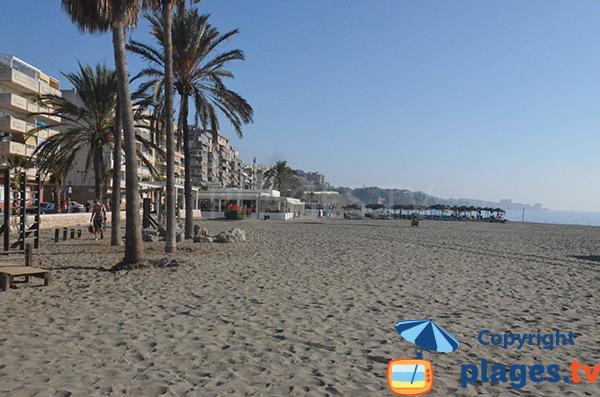 Palmiers sur la promenade de Fuengirola le long de la plage de Carvajal - Espagne
