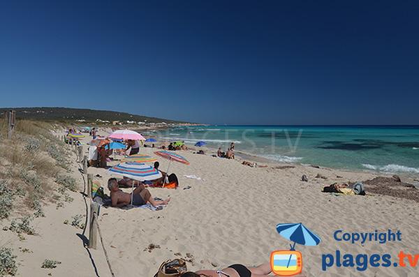 Plage sauvage à Formentera - Playa Migjorn