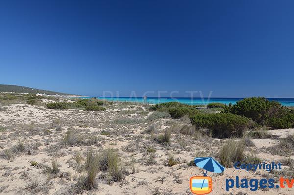 Dunes de la plage de Playa Migjorn - Formentera