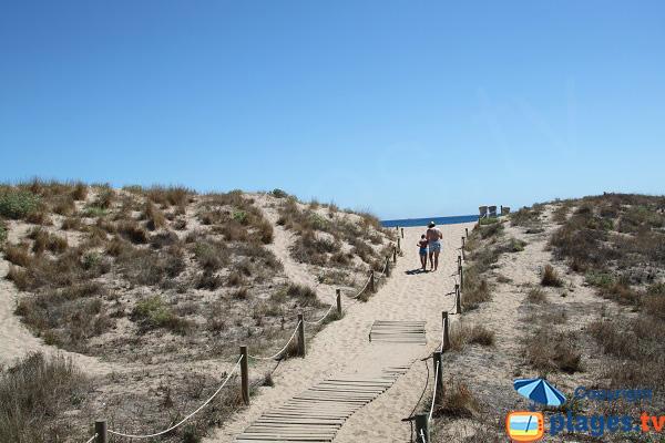 Dunes au nord de Pals
