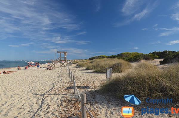 Belle plage à Ibiza - Es Cavallet