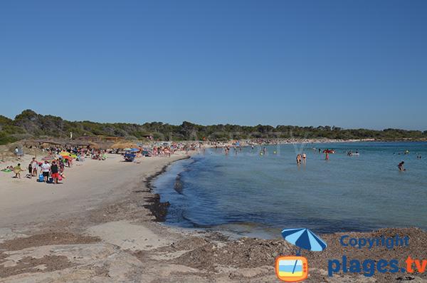 Plage d'Es Dolc à Colonia de Sant Jordi - Majorque