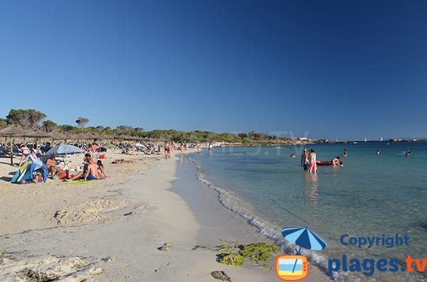 Photo de la plage d'Es Dolc à Colonia de Sant Jordi - Majorque