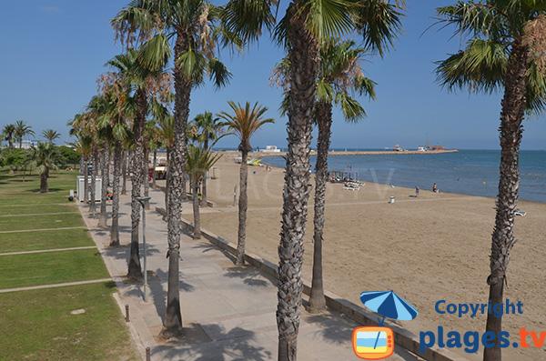 Photo de la plage d'El Garbi à Sant Carles de la Ràpita - Espagne