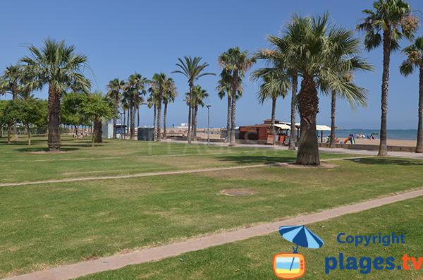 Pelouse autour de la plage de El Garbi à Sant Carles de la Ràpita