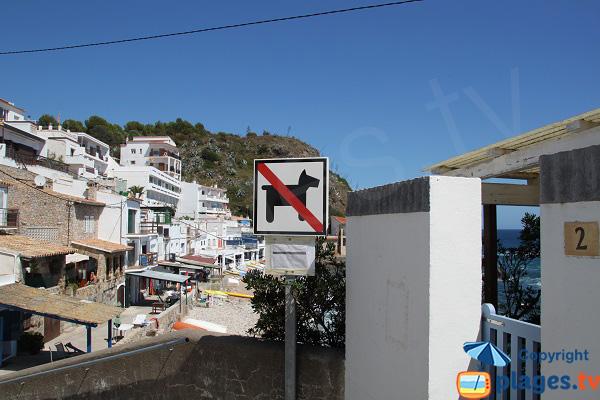 Chiens interdit sur la plage de Palamos