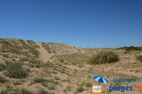 Dunes de la plage de Marisucia à Los Canos de Meca