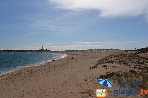 Plage à proximité du phare de Trafalgar en Andalousie
