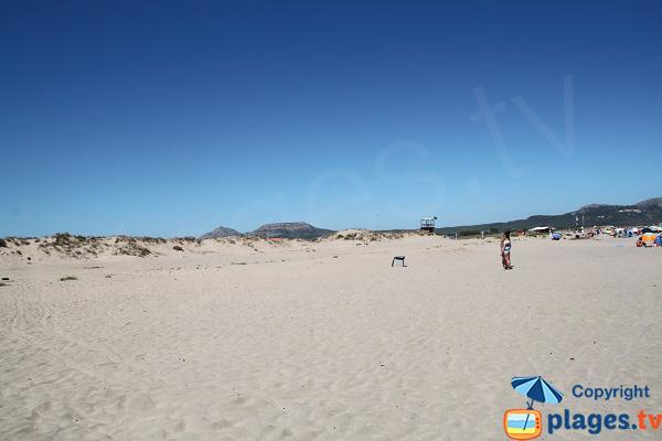 Dunes autour de la plage de Mas Pinell
