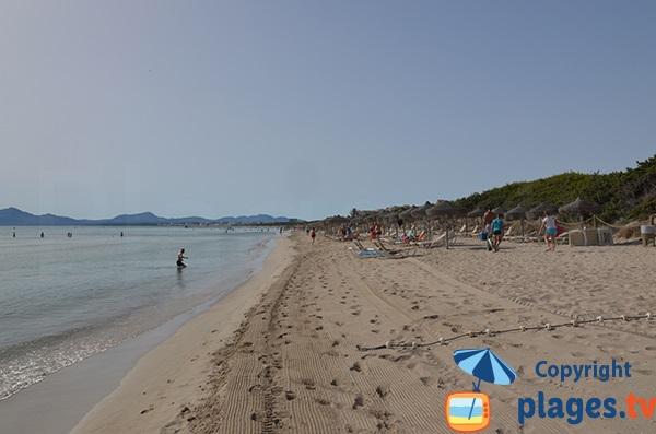 Chaises longues à louer sur la plage de Muro - Majorque