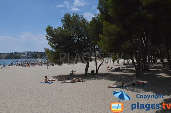 Ombre sur la plage de Palmanova - Majorque