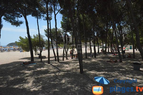 Pinède sur la plage de Palmanova - Ile de Majorque