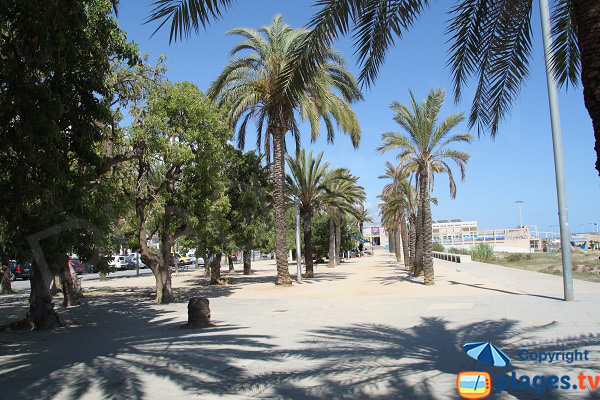 Palm trees along the beach of Ponent in Mataro