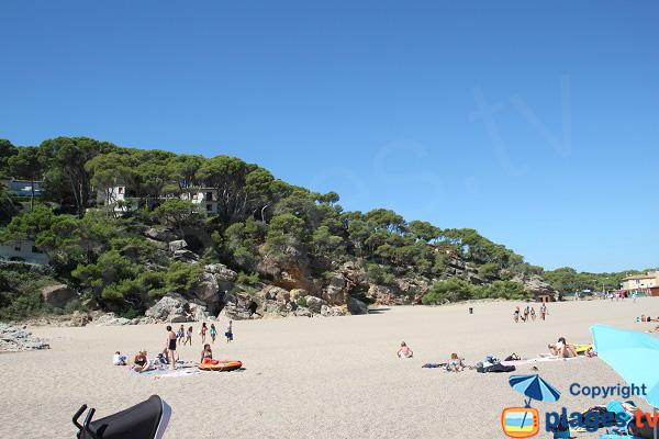 Végétations autour de la plage du Raco - Begur