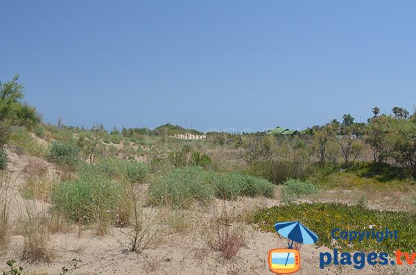 Dunes de la plage de Riumar