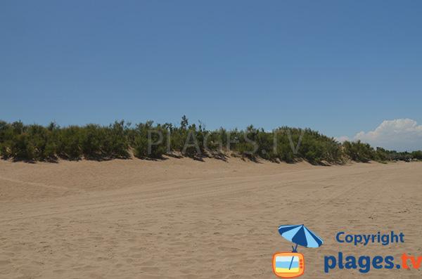 Dunes arborées de la plage de Riumar - Espagne