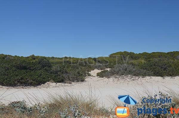 Environnement de la plage de s'Arenal d'en Tem - Ses Covetes - Majorque