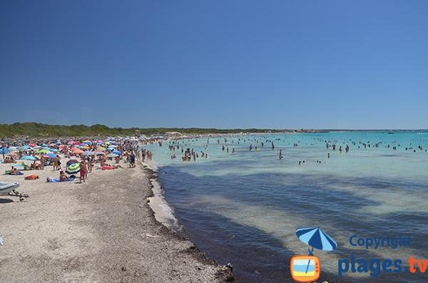 Baie de Sa Rapita à Majorque