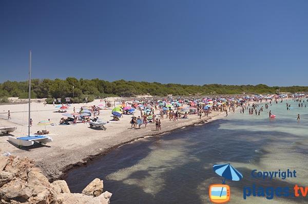 Fréquentation de la plage de Sa Rapita à Majorque
