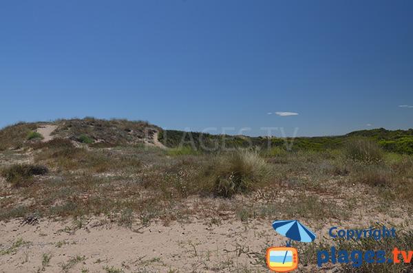 Dunes de la plage de Saler à Valence