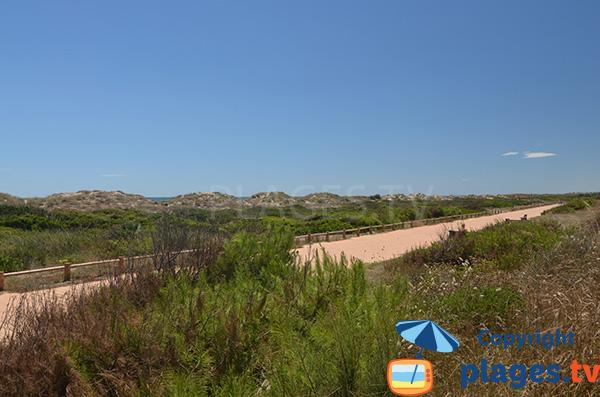Dunes et piste cyclable d'El Saler