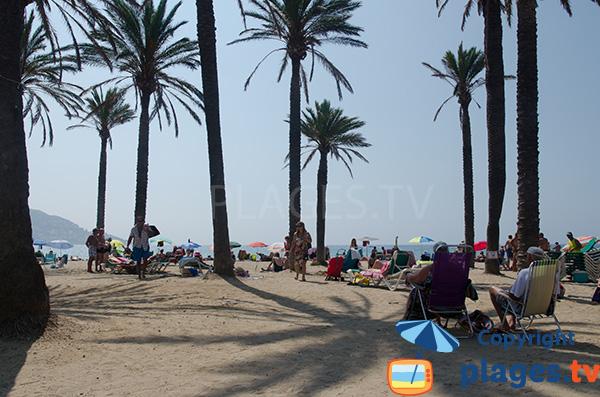 Palmiers sur la plage de Santa Margarida à Roses - Espagne