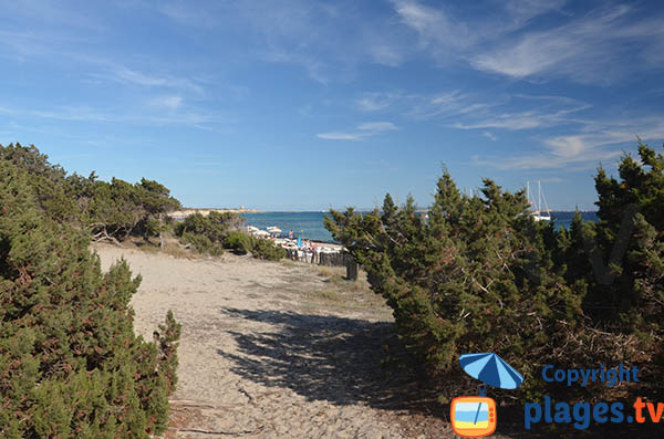 Massif dunaire de la plage de Ses Salines à Ibiza