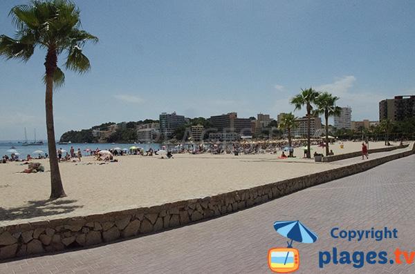Photo de la plage de Son Matias à Palmanova à Majorque