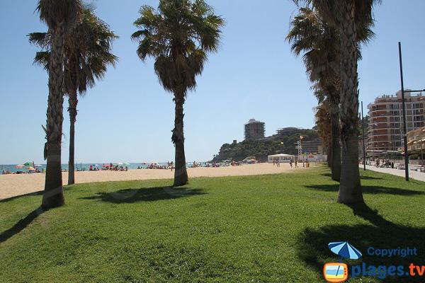 Pelouse autour de la plage de Calonge - Espagne